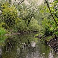 Eine umwucherte Wasserlandschaft.